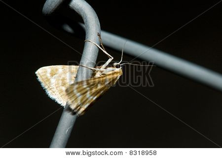 flying insect in a fence on a black background poster