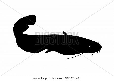 Silhouette Of The Fish Catfish