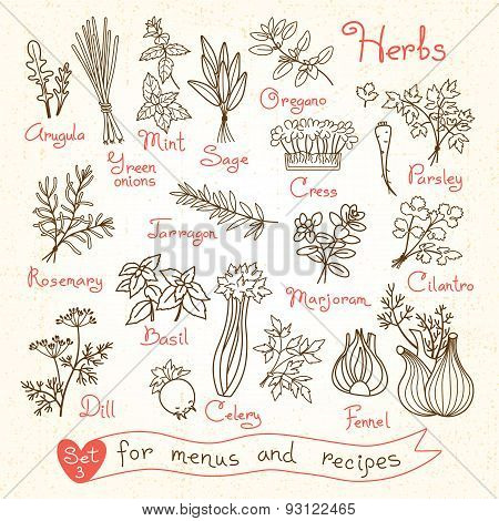 Set drawings of herbs for design menus, recipes and packages product