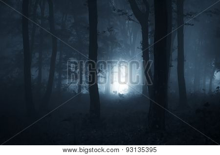 Path trough dark mysterious haunted forest at night