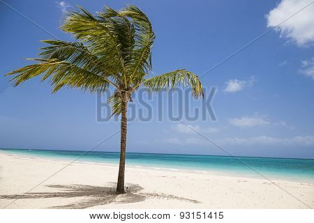 Tropical Palm Tree On The Beach