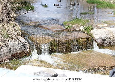 Mallards-Drakes in Stream above Waterfall