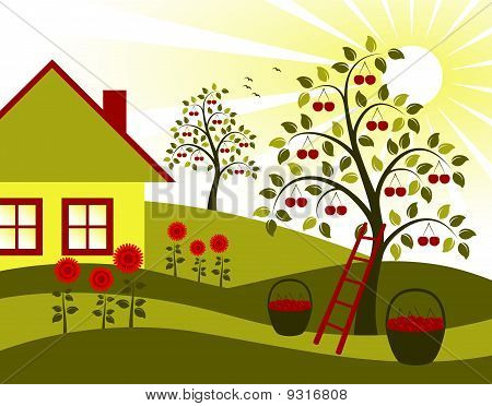 Cherry Trees, Flowers And Cottage