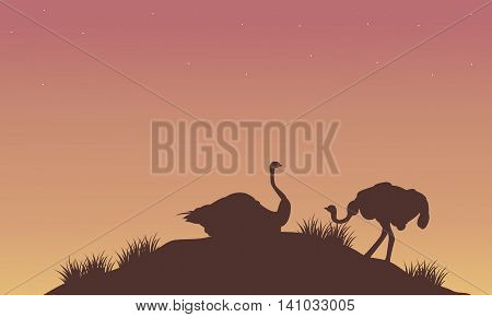 Silhouette of ostrich at afternoon vector illustration