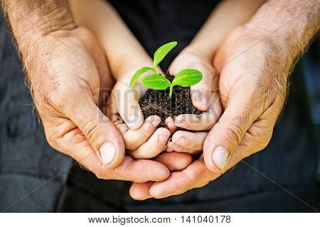 Male and Child's Hands Holding a Growing Sprout