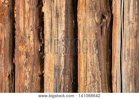 Old Oak Trunks Of Country House Wall