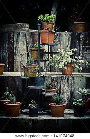Cactus Wood,cactus On Wood Still Life Natural Three Cactus Plants On Vintage Wood Background Texture