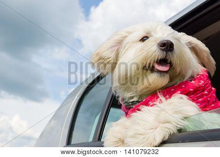 Dog enjoying a ride with the car