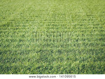 Artificial turf, Selective focus, Used for texture and background (turf, green, grass)