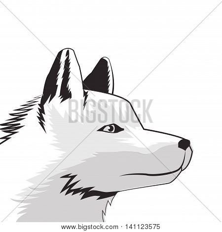 flat design wolf drawing icon vector illustration