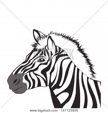 flat design zebra drawing icon vector illustration