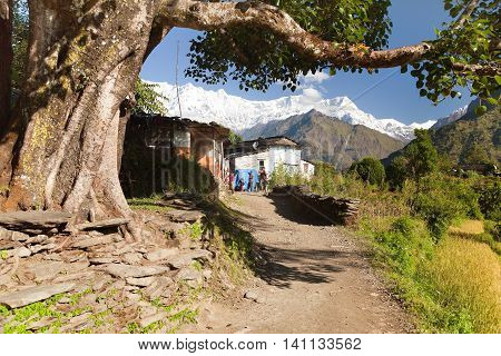 TAKAM VILLAGE NEPAL 5TH of OCTOBER 2013 - Life under himalayas - Dhaulagiri himal - Guerrilla trek in Western Nepal