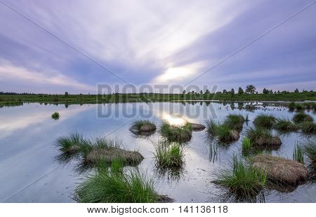 Grass in a pond in the recreation area High Fens in Belgium poster