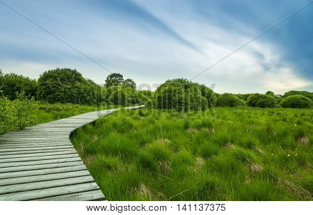 Wooden gangplank leading through the recreation area High Fens in Belgium