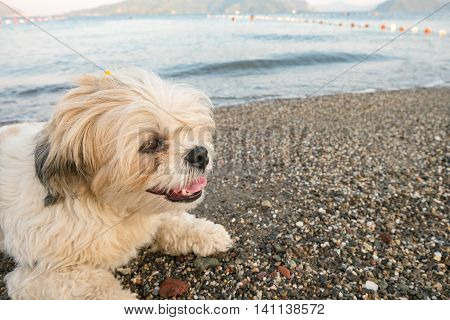 Portrait of a white dog on a beach