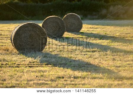 Fresh hay bails in summer golden light