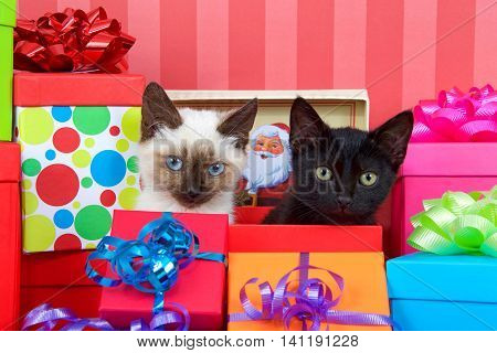 Black kitten with yellow eyes next to siamese kitten with blue eyes in red christmas present box ribbons and bows on presents around them on a red striped background looking at viewer. copy space