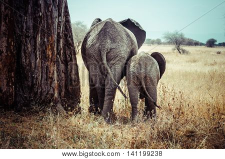 Tanzania Tarangire National Park Mother and baby elephant