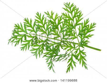 fresh carrots leaf