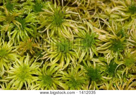 Green Moss Close Up