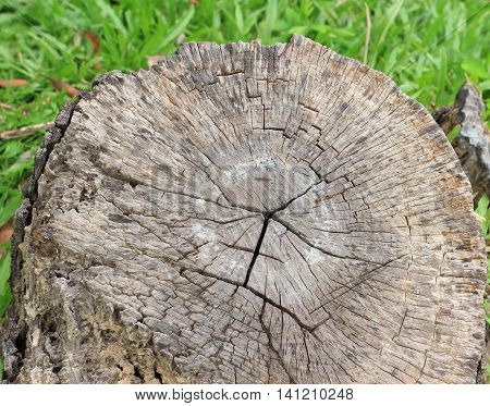 Tree stump on the green grass. Environmental problem concept