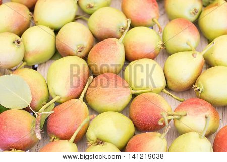 Ripe sweet yellow red pears background macro