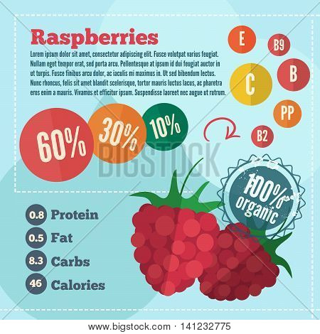 Raspberry infographics in flat style. Vector illustration with vitamins protein fat carbs and calories of organic food.