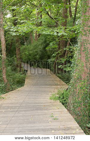 Wooden Path In Green Forest, Symbol Of Life