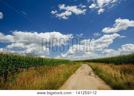 Old Broken Sand Path Between Fields With Corn
