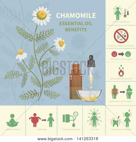 Chamomile Essential Oil Benefits. Aromatherapy infographic. All objects are conveniently grouped and are easily editable.