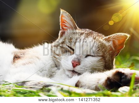 Cat lying and dreaming outdoors in sunlight