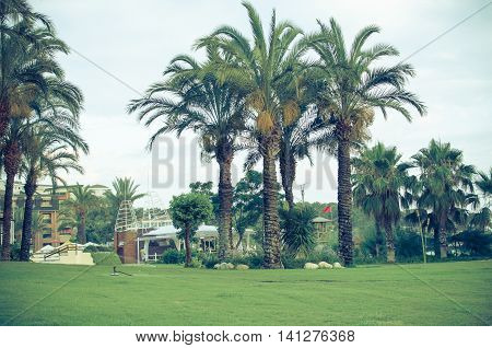 Tropical landscaping with planting and palm trees lawn foliage shrubs grass and fences. Summer park and gardens of large house or hotel.