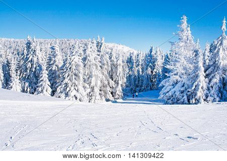 Vibrant panorama of the slope at ski resort, people skiing, snow pine trees, blue sky