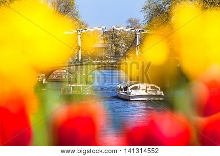 Beautiful view through colorful yellow and red defocused tulip blossoms to Amsterdam canal with cruise boats and old bridge (copy space)