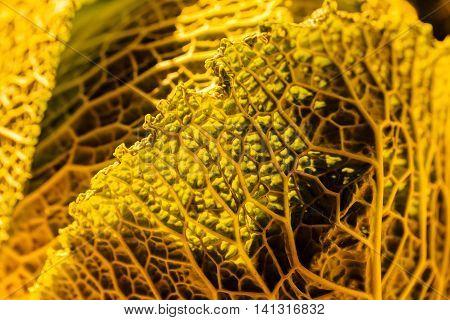 Autumn Vegetable Texture