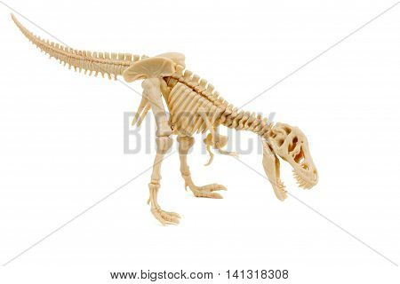 T-Rex skeleton of dinosaur on a white background
