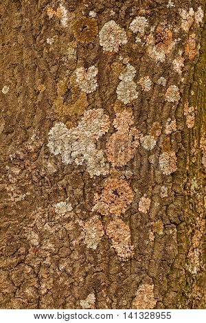 Tree Bark Structure