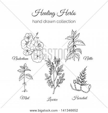 Holistic Medicine. Healing Herbs Illustration. Handdrawn Nasturtium, Nettle, Mint, Licorice and Horsetail. Health and Nature collection. Vector Ayurvedic Herb. Herbal Natural Supplements. Organic plants.