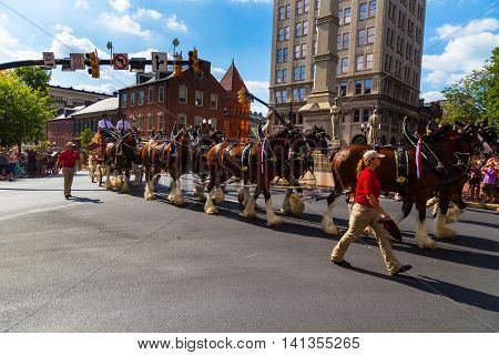 Lancaster PA - August 4 2016: The Budweiser Clydesdales on a promotional tour pull the iconic red beer wagon through the center of the city in Penn Square.