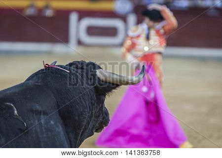 Bullfighter with the capote or cape Spain