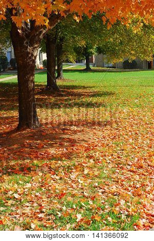 autumn tree and fallen leaves on the lawn in residential area