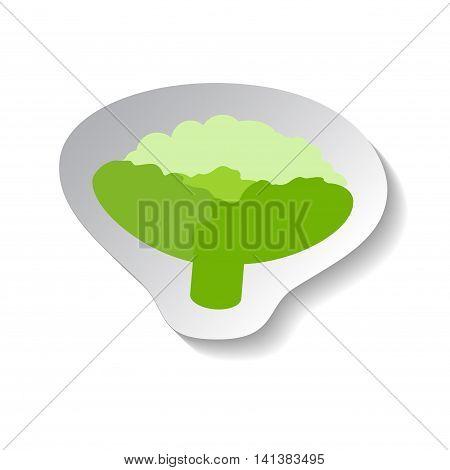 Cauliflower vector icon in flat style with shadow. Vegetable pictogram. Cauliflower illustration on white. Cauliflower isolated. Cauliflower cook ingredient. Healthy vegetarian food. Cauliflower logo