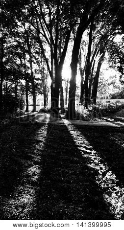 High contrast black and white pathway backlit by glowing sunset shining through tall trees