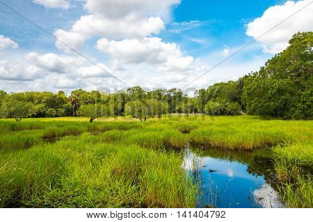 Florida wetland natural landscape with cloudy sky