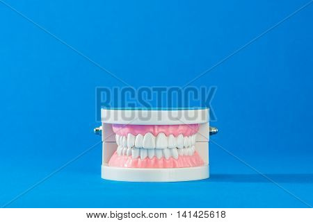 Model of teeth on the blue background