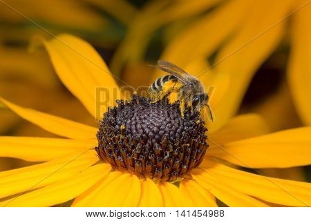 Bee sitting on yellow flower in macro view