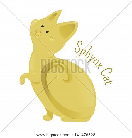 Sphynx Cat isolated on white background. Breed known for its lack of coat fur. Skin has texture of chamois. Part of series of cute cartoon funny kitten species. Child fun pattern icon. Vector