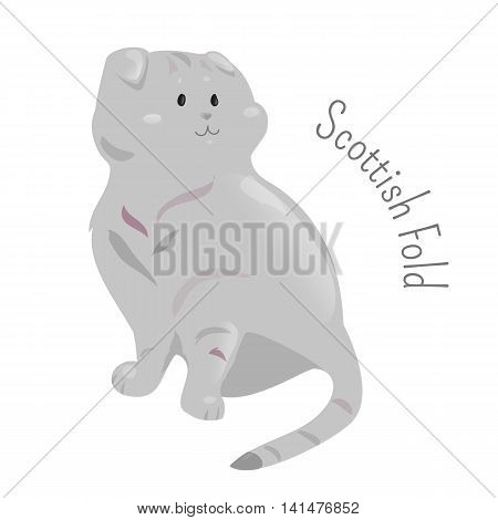 Scottish fold isolated. Breed of domestic cat with a natural dominant-gene mutation that affects cartilage throughout body. Part of series of cartoon kitten species. Child fun pattern icon. Vector