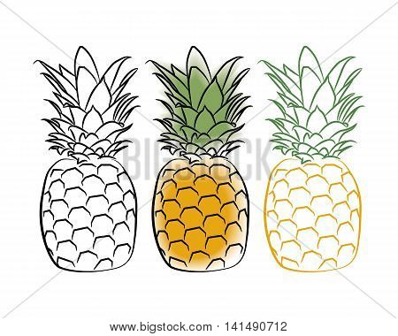 Three pineapple simply draw style. Vector illustration