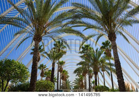 Palm alley in Ciudad de las artes y las ciencias in Valencia Spain